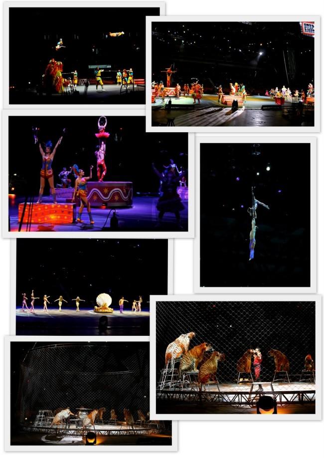 Ringling Bros Circus1